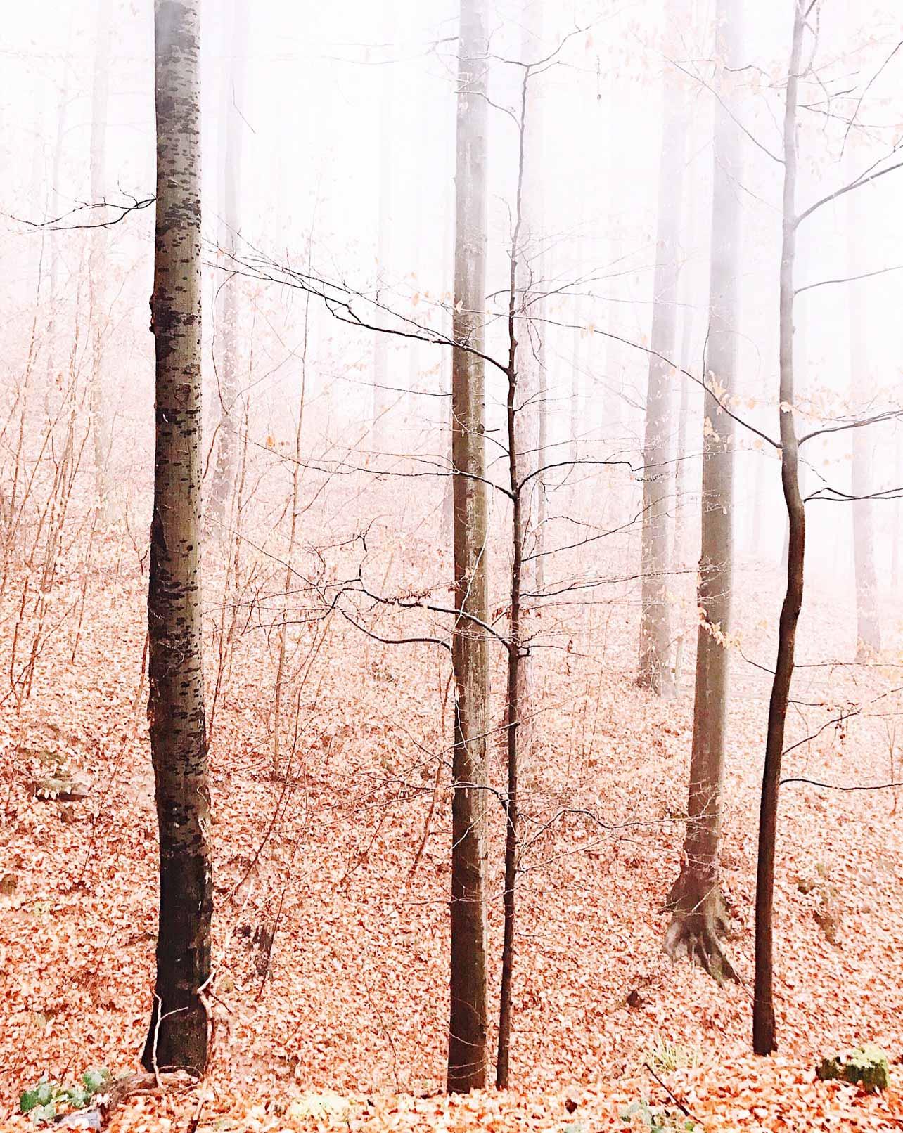 Neben im Wald